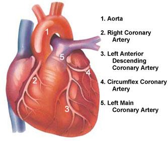 Angina pectoris: sintomi, cause, cure e chirurgia