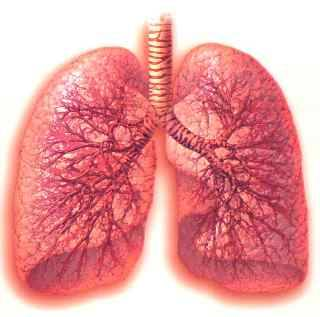 Trapianto di polmoni_.jpg