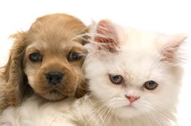 allergia agli animali domestici.jpg