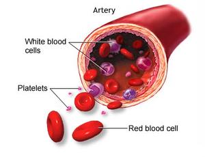 arterie e sangue21.jpg