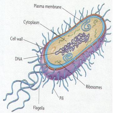 Le malattie infettive: cosa sono e da cosa sono causate