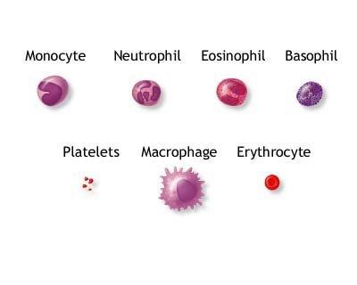 Porpora trombocitopenica idiopatica (ITP) : sintomi, segni, cause e cure