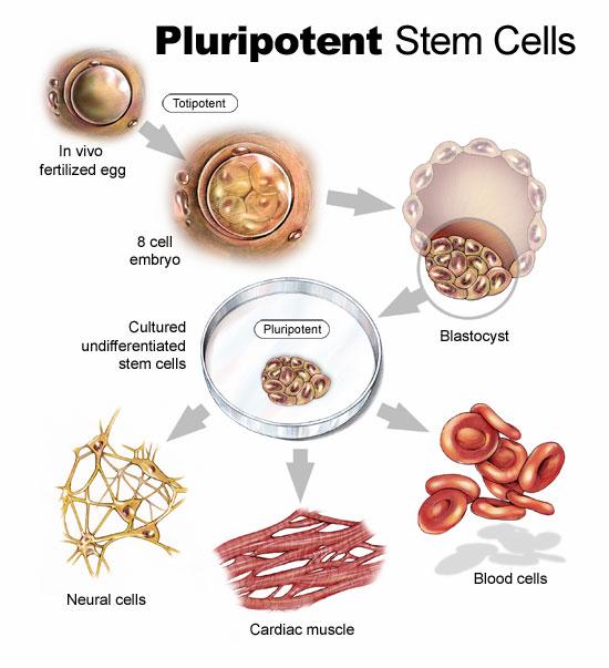 Trapianto di cellule staminali: informazioni sulla procedura
