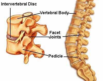 Mal di schiena : cause e rimedi