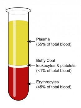 esame del sangue plasma.jpg