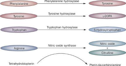 fenilchetonuria metabolismo1.jpg