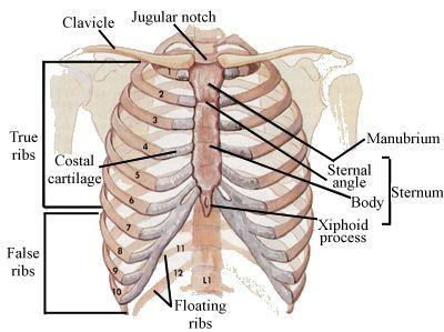 Fratture costali:sintomi, cure e pericoli