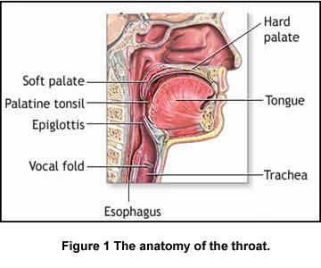 mal di gola anatomia1.jpg