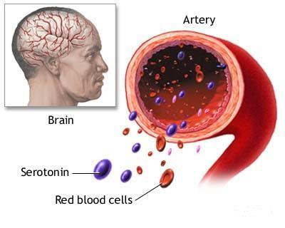 meccanismo della serotonina.jpg