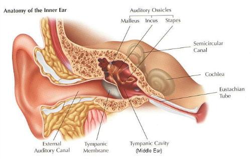 Neuroma acustico: sintomi, cause, complicazioni e terapie