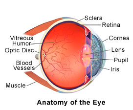 occhio anatomico.jpg