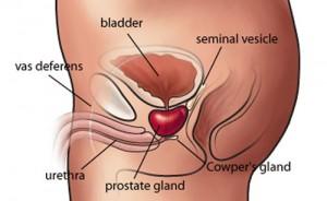 Prostatite: sintomi, cause e cure