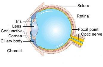 Retinoblastoma : segni, sintomi, cause, terapie e chirurgia