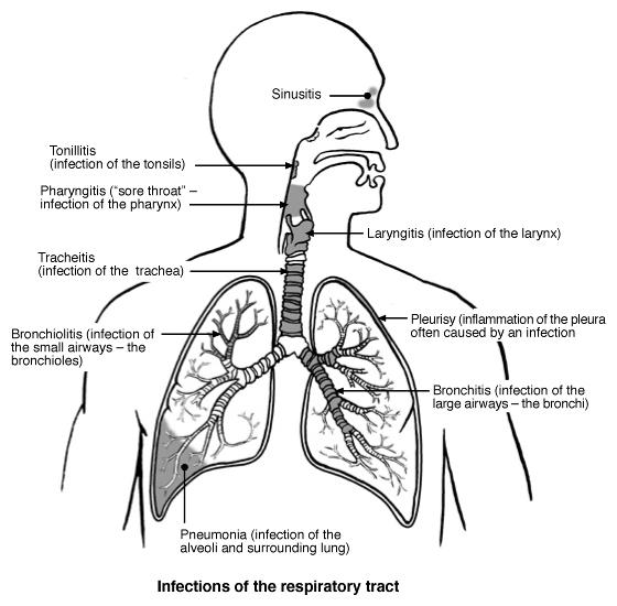 Cosa è l'Influenza?