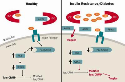 insulino resistenza.jpg
