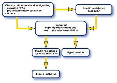 sindromemetabolica2.jpg