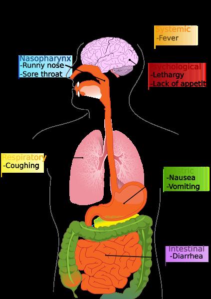 sintimi influenza suina.png