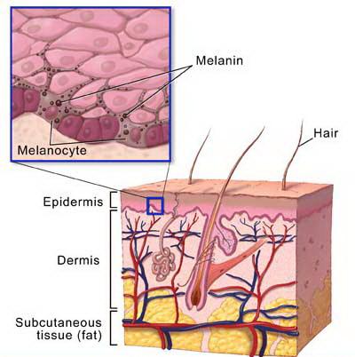 vitiligine melanociti.jpg