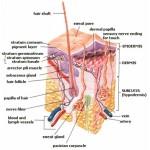 La psoriasi : cause, sintomi, cure ed approfondimenti