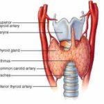 Ipotiroidismo : cause e diagnosi