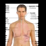 La mononucleosi : sintomi e rimedi