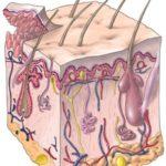 Nevralgia post-herpetica : un dolore sottovalutato