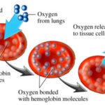 Anemia da carenza di ferro: cause, sintomi e rimedi