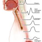 Manometria esofagea: ecco perchè si pratica