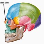 Setto nasale deviato: cure e chirurgia