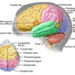 Mioclono: sintomi, significato,cause e rimedi