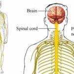 Atassia: sintomi, cause, genetica e cure