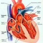 Rigurgito della valvola mitrale : sintomi, segni, cause e cure