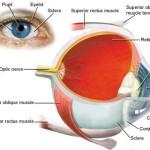 Cheratite : sintomi, cause, diagnosi e cure