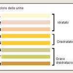 Colore delle urine : sintomi, cause, diagnosi, significato e rimedi
