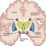 Sindrome da serotonina : sintomi, cause, rischi e cure