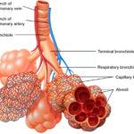 Attacco d'asma : sintomi, cause, pericoli, diagnosi e cure