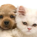Allergia agli animali domestici :sintomi, cause, diagnosi e cure