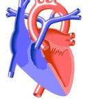 Atresia polmonare : cause, cure e prevenzione