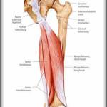 Infortunio al bicipite femorale : sintomi, cause, cure e prevenzione