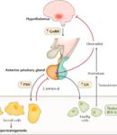 Ipogonadismo maschile: sintomi, cause e terapie